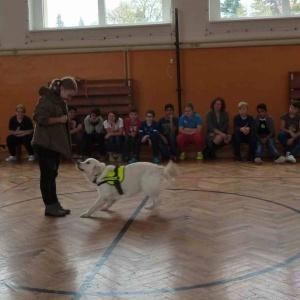 Výcvik asistenčních psů